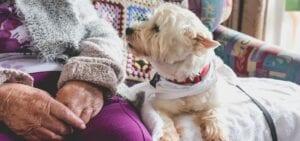 Dog Sitting Next to Senior